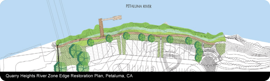 Quarry Heights River Zone Edge, Petaluma, CA. Client: CSW|ST2